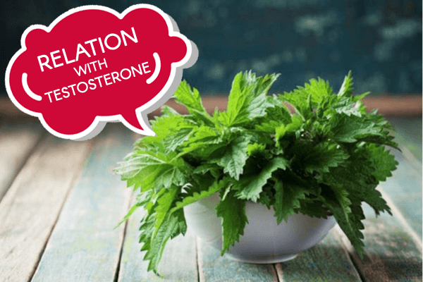 Stinging Nettle Testosterone - Benefits, Dosage & Side